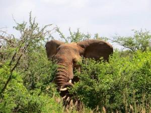 elephant-378067 960 720